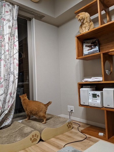 猫5IMG_20200325_232059