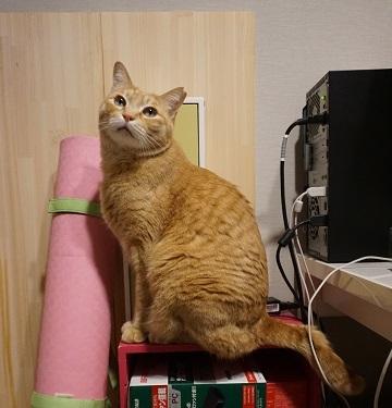 猫1DSC03122