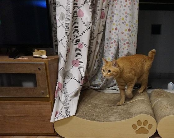 猫1DSC03343