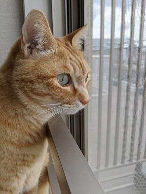 猫2IMG_20200509_094654