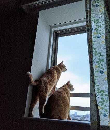 猫3IMG_20200518_043358