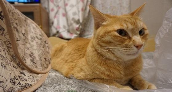 猫3DSC03303