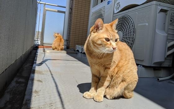 猫1IMG_20200411_102956