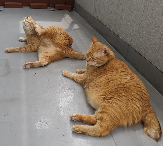猫2IMG_20200808_110630
