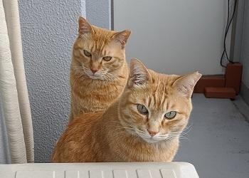 猫3IMG_20200328_100742