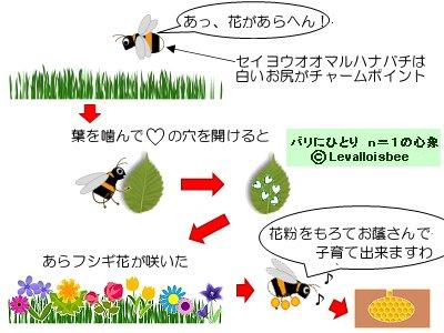 マルハナバチは花咲かバチです