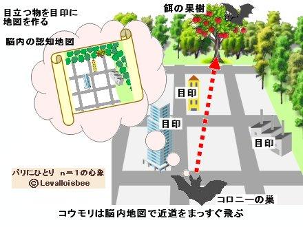 コウモリは脳内の認知地図で近道する