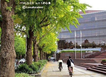 県民ホール前の秋の舗道downsize