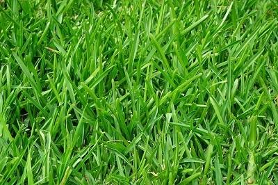 grass-375586_640.jpg