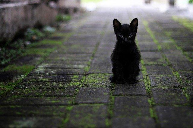 cat-3169476_640.jpg