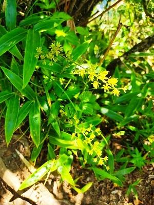黄色い花20200815