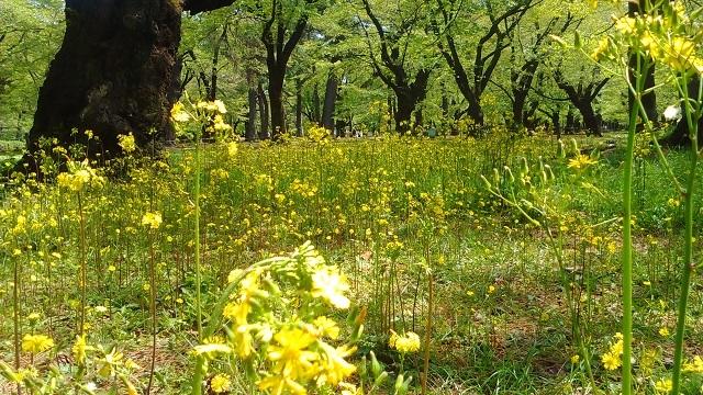 黄色い花20200415