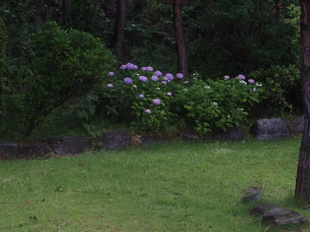 200611-61.jpg