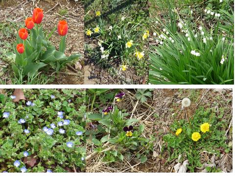 野草などの花4月上旬