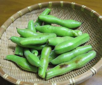 ソラマメ収穫物5月下旬