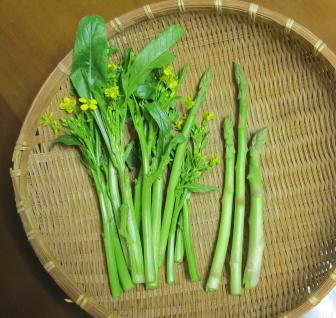 オータムポエムとアスパラ収穫物