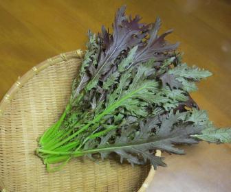 収穫物コーラルリーフ