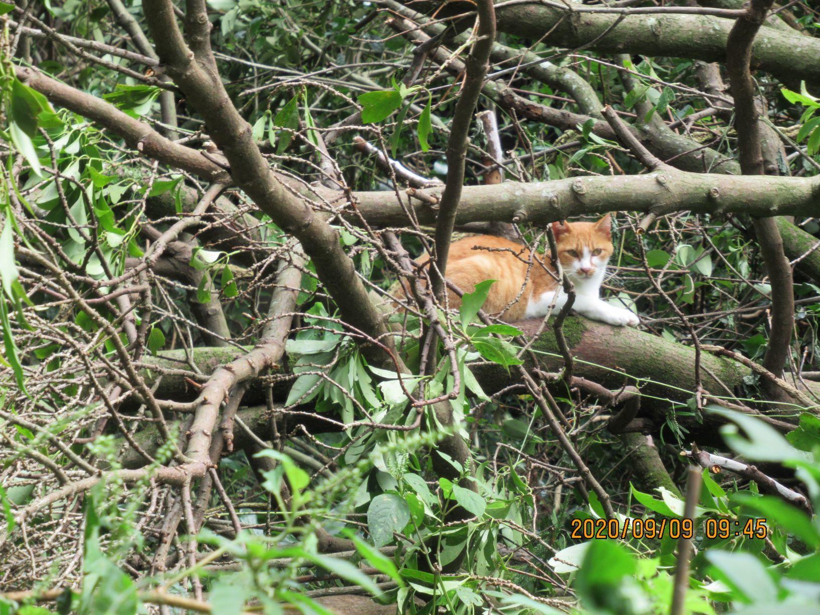 倒れた木と猫