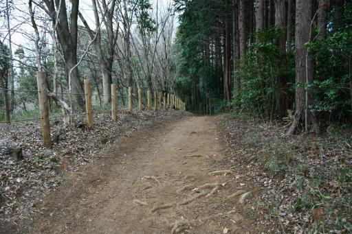 202300310・ニコン狭山湖2-10・トトロの森
