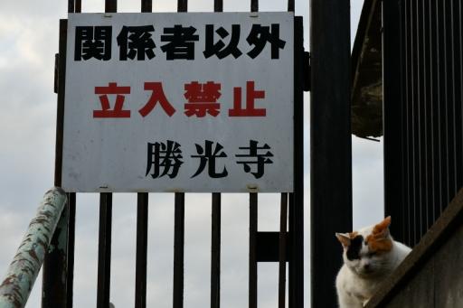 202300310・ニコン狭山湖とっておき6