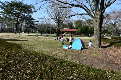 20200321・墓参り野川公園2-06