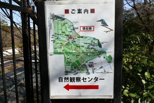 20200321・墓参り野川公園2-08・中