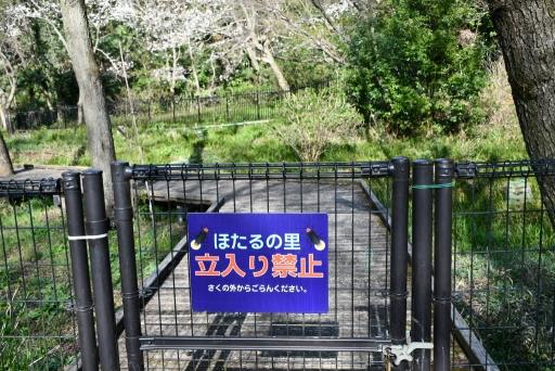 20200321・墓参り野川公園2-18・中