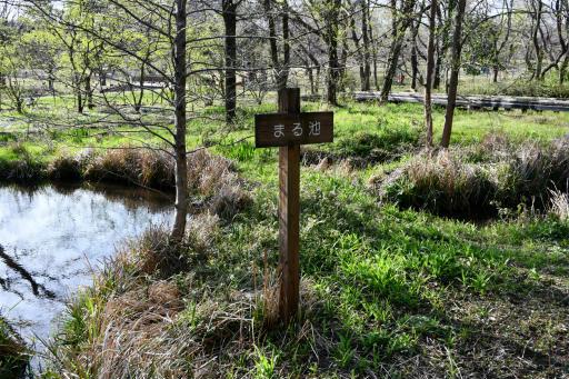 20200321・墓参り野川公園2-15・まる池
