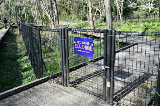 20200321・墓参り野川公園2-17