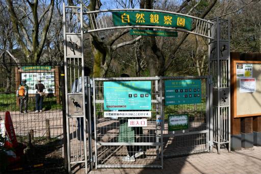 20200321・墓参り野川公園2-13・いよいよ自然園へ