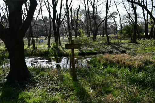 20200321・墓参り野川公園2-23
