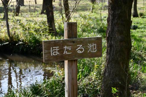 20200321・墓参り野川公園2-19・ほたる池