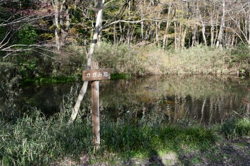 20200321・墓参り野川公園3-04・かがみ池
