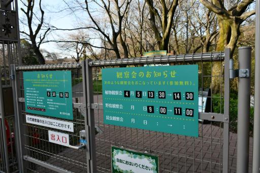 20200321・墓参り野川公園3-16