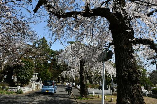 20200321・墓参り野川公園空09