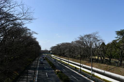 20200321・墓参り野川公園空18・野川公園から東八道路
