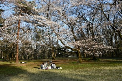 20200321・墓参り野川公園空24・野川公園、宴会の空・大