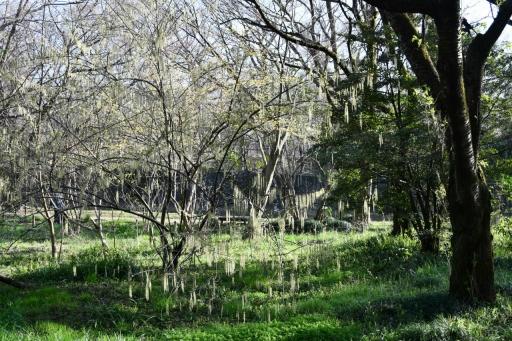 20200321・墓参り野川公園空21・イヌシデの空・大