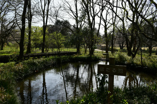 20200321・墓参り野川公園空20・ほたる池の空