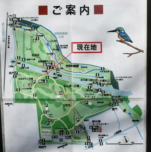 20200321・墓参り野川公園ネオン3 - コピー