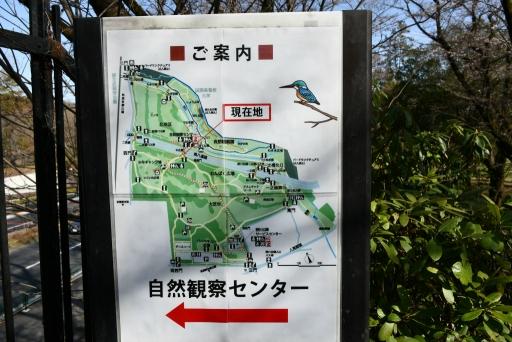 20200321・墓参り野川公園ネオン3