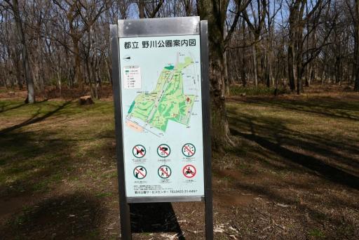20200321・墓参り野川公園ネオン1