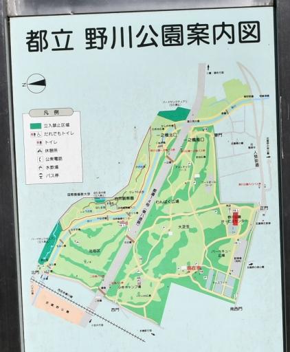 20200321・墓参り野川公園ネオン1 - コピー