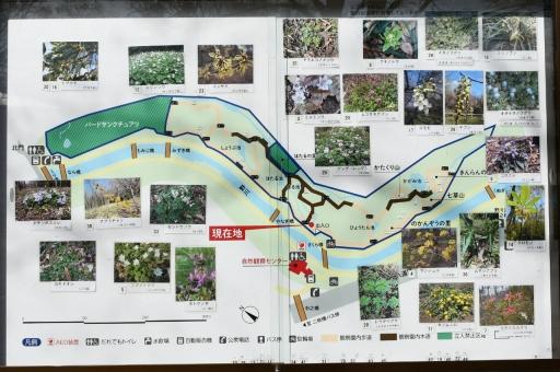 20200321・墓参り野川公園ネオン5 - コピー
