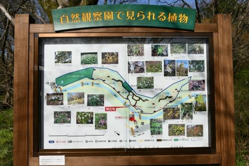 20200321・墓参り野川公園ネオン5