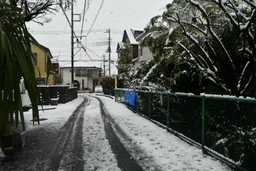 20200329・季節外れの雪05