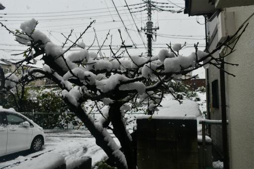 20200329・季節外れの雪01