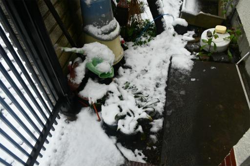20200329・季節外れの雪02