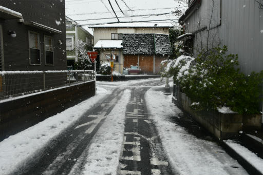 20200329・季節外れの雪09