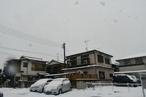 20200329・季節外れの雪07